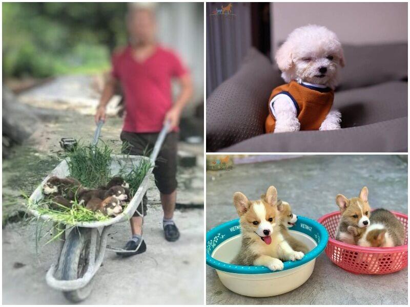 Cửa hàng bán thú cưng tại Hà Nội